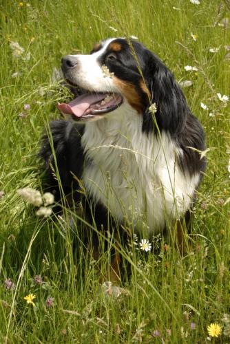 Hotelový pes Bára